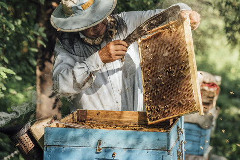 Russland, Beekeeper checking frame with honeybees - VPIF01142