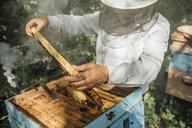 Russland, Beekeeper checking frame with honeybees, smoker and smoke - VPIF01145
