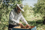 Russland, Beekeeper checking frame with honeybees - VPIF01148