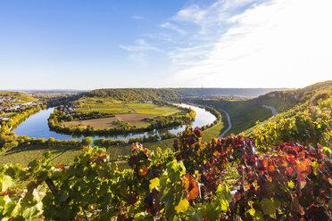 Germany, Baden-Wuerttemberg, Mundelsheim, Neckar river loop and vine yards - WDF04911
