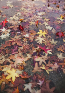 Puddle with autumn leaves - RAEF02225