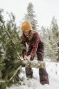 Woman cutting pine tree in forest during winter - CAVF56847