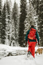 Rear view of woman with dog walking on snow covered field in forest - CAVF56859