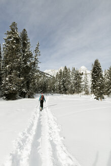 Rear view of woman with skies walking on snow covered field in forest - CAVF56862