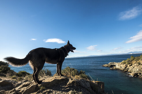 Side view of dog standing on rocks at beach against sea and sky - CAVF56913
