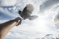 Low angle view of bird perching on hand against sky - CAVF56961
