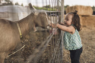Side view of baby girl touching goat in animal pen - CAVF56997