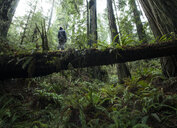 Low angle view of man standing on fallen tree trunk at Jedediah Smith Redwoods State Park - CAVF57246