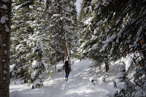 Rear view of woman hiking on snow field in forest - CAVF57264