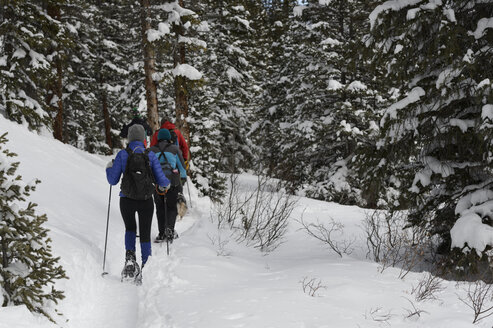 Rear view of hikers hiking in snow covered forest - CAVF57267