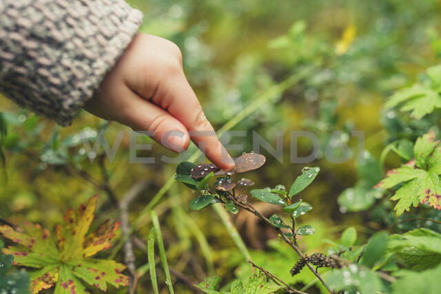 Cropped hand of girl touching dew drops on plant at forest - CAVF57448