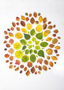 Autumn leaves on white background - ABRF00254