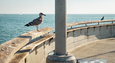 USA, California, Los Angeles, Seagull and dove on the pier of Venice - SEEF00048