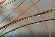 Close-up nature shot of water drops on a plants - INGF08158