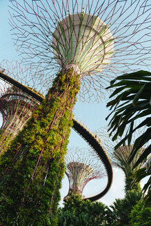 Singapore, Gardens by the Bay, Supertree Grove with platforms at a sunny day - GEM02631