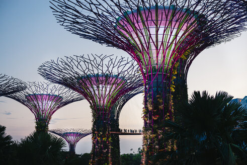 Singapore, Gardens by the Bay, Supertree Grove at sunset - GEM02643