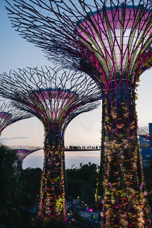 Singapore, Gardens by the Bay, Supertree Grove at sunset - GEM02646