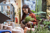 Female customer looking at potted plant in store - MASF10230