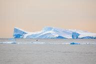 Gigantic iceberg in Disco Bay - INGF08379
