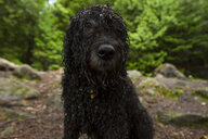 Close-up portrait of wet dog sitting in forest - CAVF57749