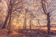 Nature shot of bare trees in a forest during winter - INGF08655