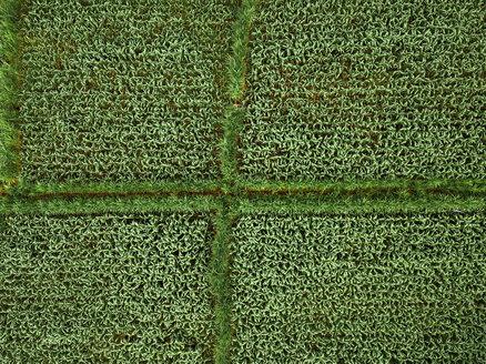 Indonesia, Bali, Keramas, Aerial view of corn fields - KNTF02468