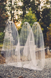 Double exposure of boys in ghost costumes against trees at cemetery during Halloween - CAVF57972