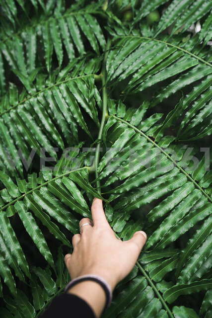 Cropped hand of woman touching leaves - CAVF58014