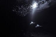 Fish swimming in sea at night - INGF08740