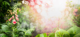 Close-up of fresh green plants growing in a garden - INGF08911