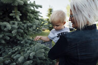 Rear view of Grandmother carrying grandson while standing by pine trees at farm - CAVF58487