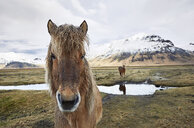 Portrait of Icelandic horse standing on field against cloudy sky during winter - CAVF59174