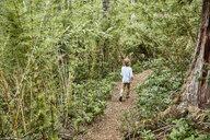 Chile, Puren, Nahuelbuta National Park, boy walking on path through forest - SSCF00139