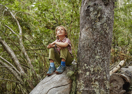 Chile, Puren, Nahuelbuta National Park, boy sitting on a tree in forest looking up - SSCF00142