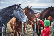 Chile, Tierra del Fuego, Porvenir, boy stroking horses on paddock - SSCF00268
