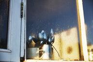 Cutlery behind kitchen window - SSCF00274