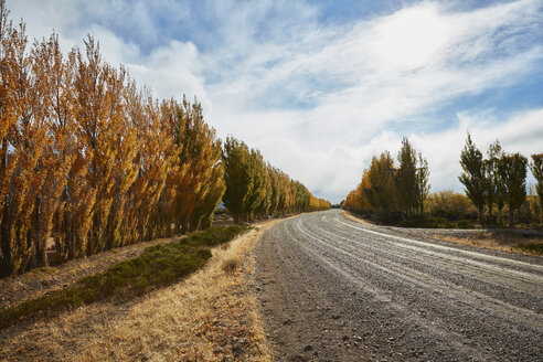 Argentina, Lago Posadas, gravel road with autumnal trees - SSCF00289