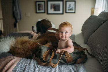 Portrait of cute baby boy sitting in shoulder bag by dog on bed - CAVF59513