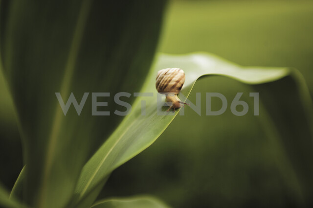 High angle close-up of snail on leaf - CAVF59571