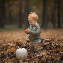 Cute baby boy looking at pumpkin while standing on dry leaves at park - CAVF59622