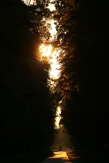 Silhouette of trees in the evening sunlight - INGF09307