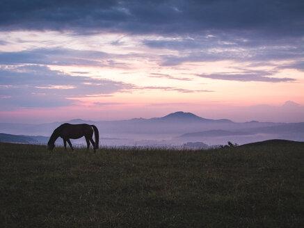 A horse grazing in a field - INGF09343
