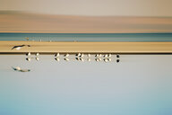 A flock of birds in a row by the water - INGF09825