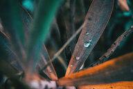 Detailed shot of an old leaf - INGF09899