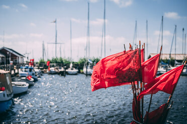 Sailboats moored in the harbor - INGF09914