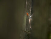 Wildlife shot of a deer - INGF09923