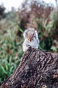 Animal portrait of a squirrel - INGF10317