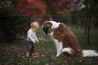 Baby boy and dog looking at pumpkin fallen on field in yard - CAVF60129