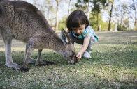 Australia, Brisbane, little girl feeding kangaroo - GEMF02673