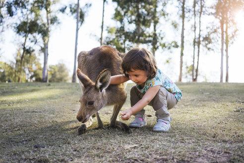Australia, Brisbane, little girl feeding kangaroo - GEMF02676
